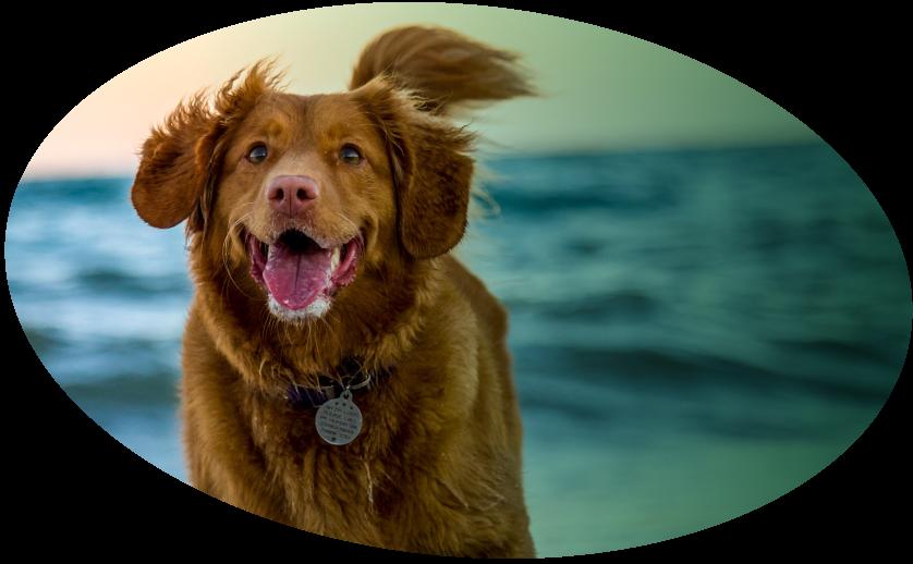 image dog