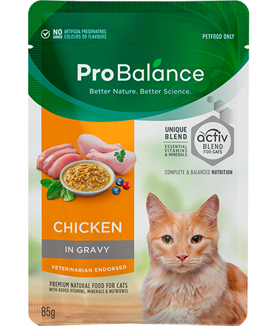 Premium Wet Cat Food Adult Chicken in Gravy